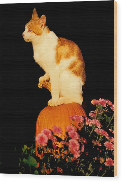 King Of The Pumpkin Wood Print