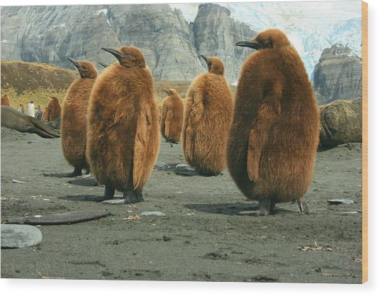King Penguin Chicks Wood Print