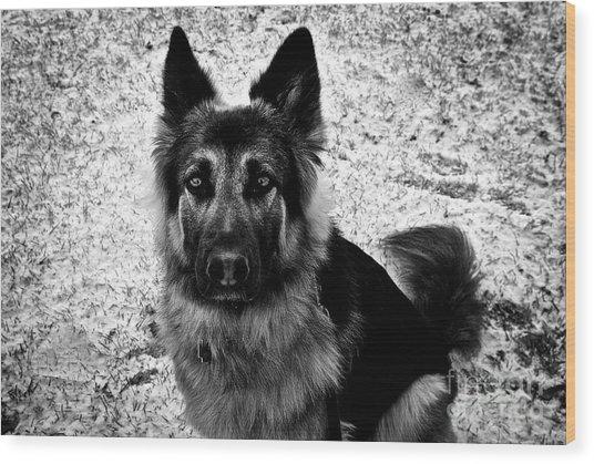 King Shepherd Dog - Monochrome  Wood Print