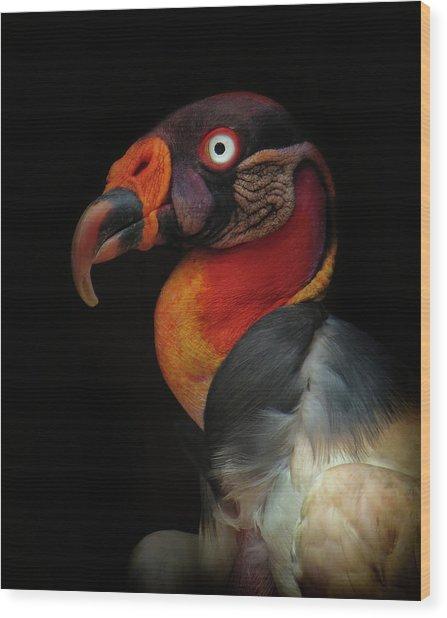 King Vulture-sarcoramphus Papa Wood Print