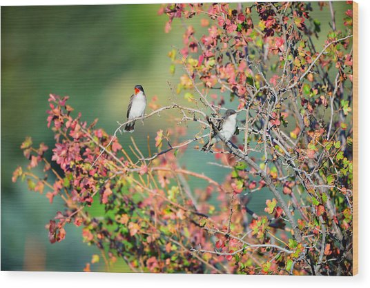 Kingbird Pair Wood Print