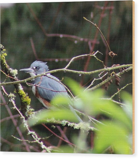 Kingfisher In The Rain Wood Print