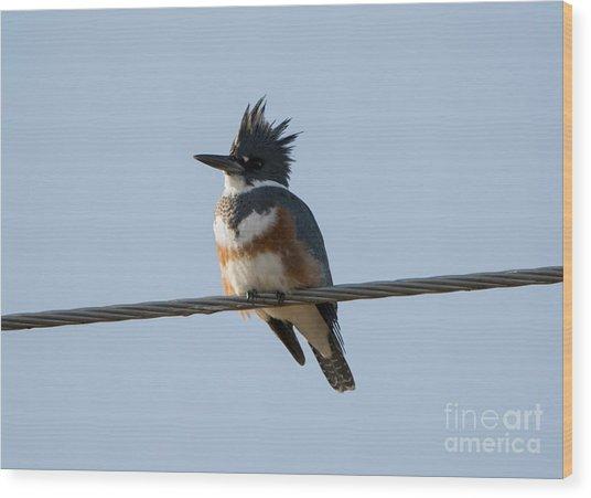 Kingfisher Profile Wood Print