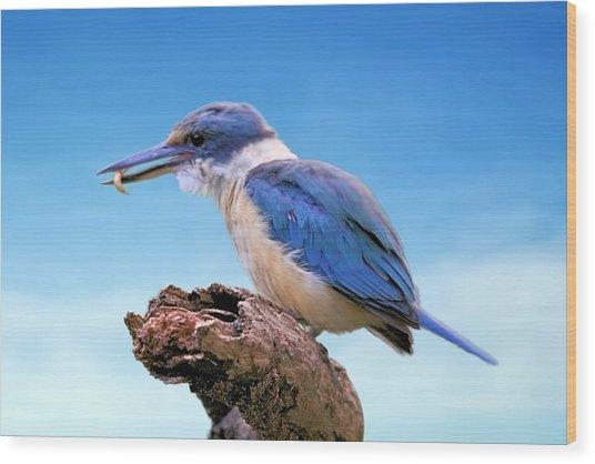Kingfisher With Grub Wood Print