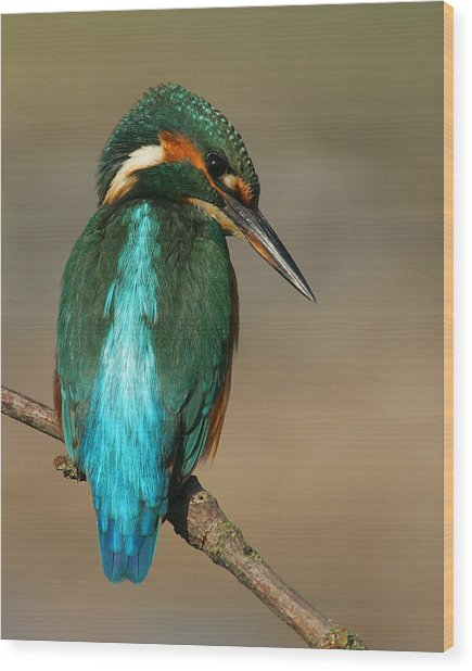 Kingfisher1 Wood Print