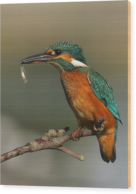 Kingfisher2 Wood Print