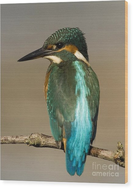 Kingfisher3 Wood Print