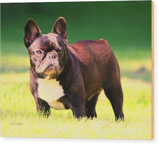 King's Frenchie - French Bulldog Wood Print