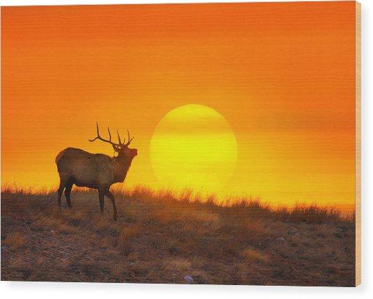 Kiss The Sun Wood Print