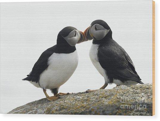 Kissing Puffins Wood Print
