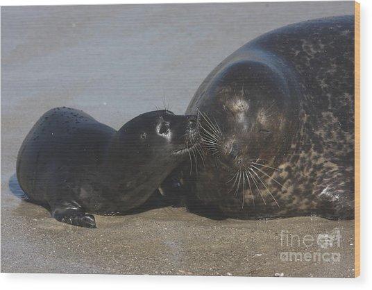 Kissing Seals Wood Print