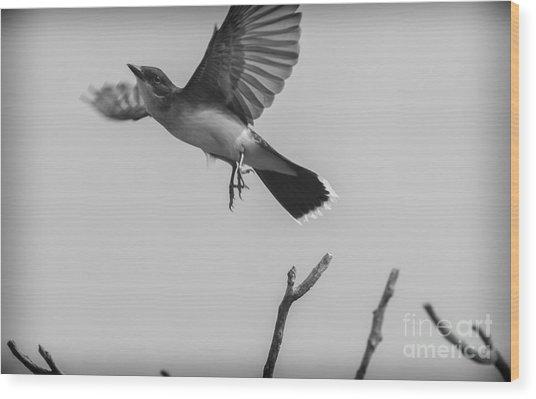 Kite... Wood Print