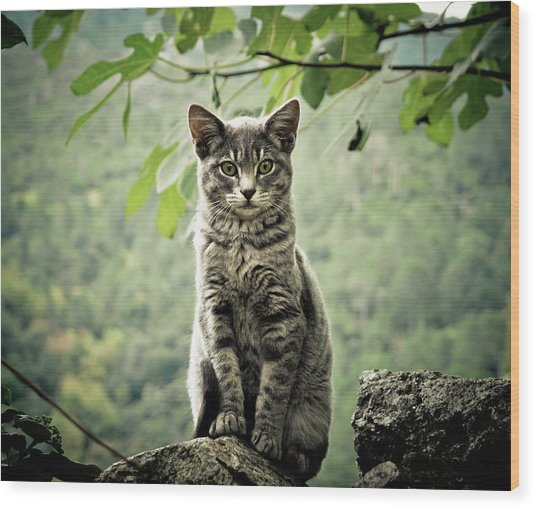 Kitten Wood Print by By Corsu Sur Flickr