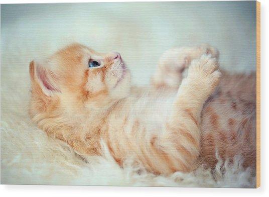 Kitten Lying On Its Back Wood Print by Susan.k.