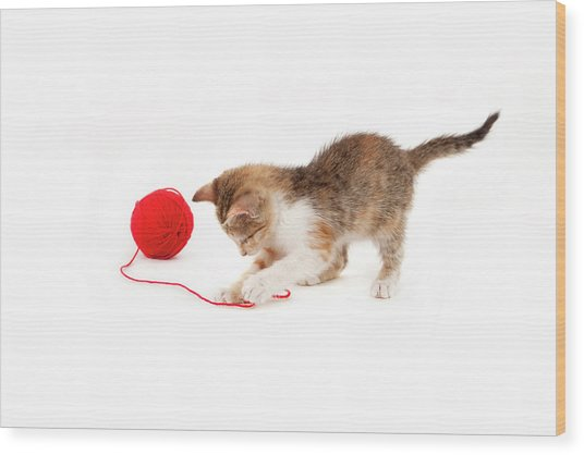 Kitten Playing With A Ball Of Red Wool Wood Print by By Kerstin Claudia