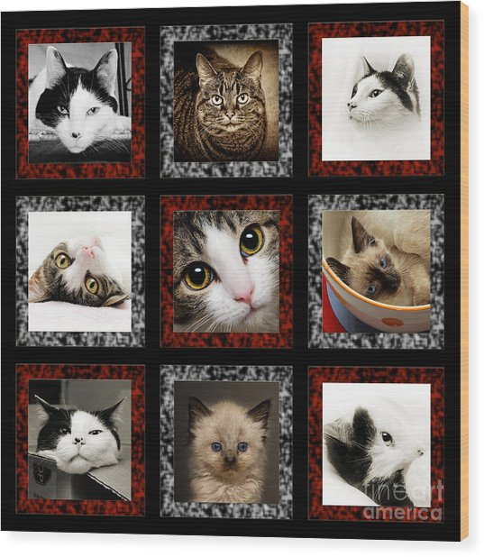 Kitty Cat Tic Tac Toe Wood Print