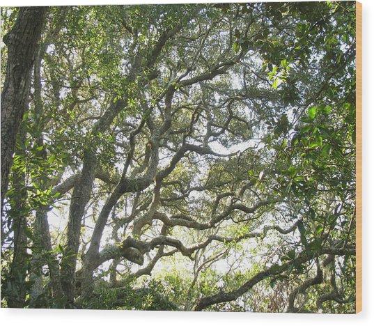 Knarly Oak Wood Print