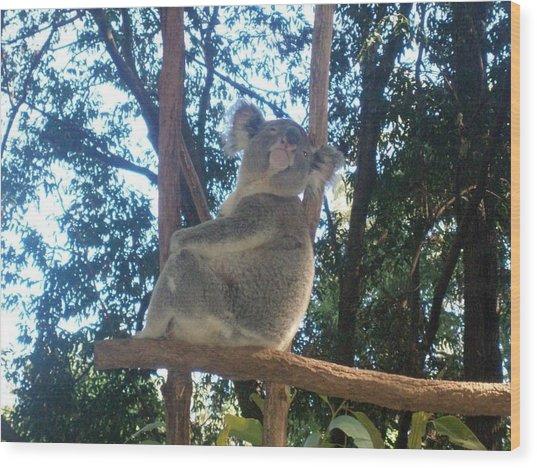 Koala Bear In Australia Wood Print