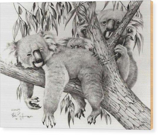 Koala Family Wood Print by Bob Patterson