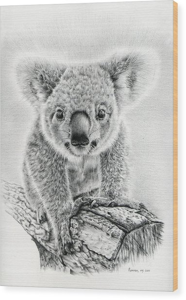 Koala Oxley Twinkles Wood Print
