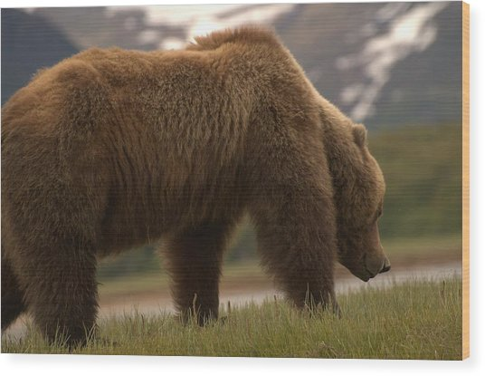 Kodiak Bears Wood Print