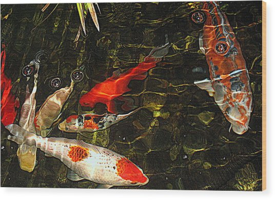 Koi Joy Wood Print