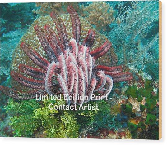 Komodo Island 6 Wood Print