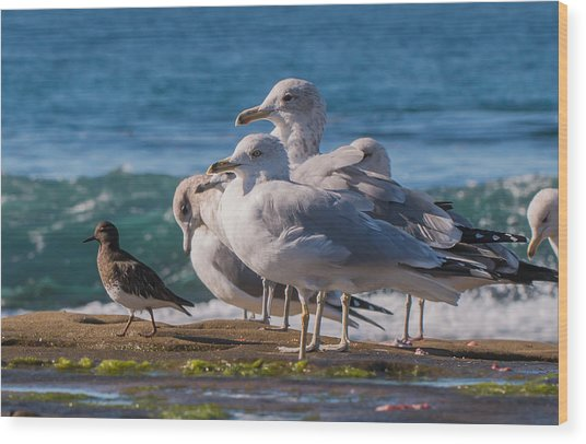 La Jolla Birds Wood Print