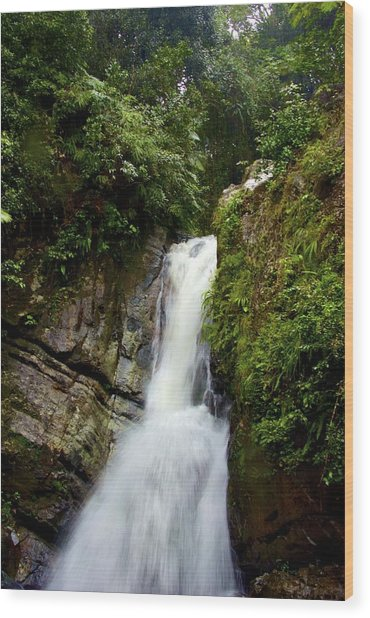 La Mina At El Yunque Wood Print