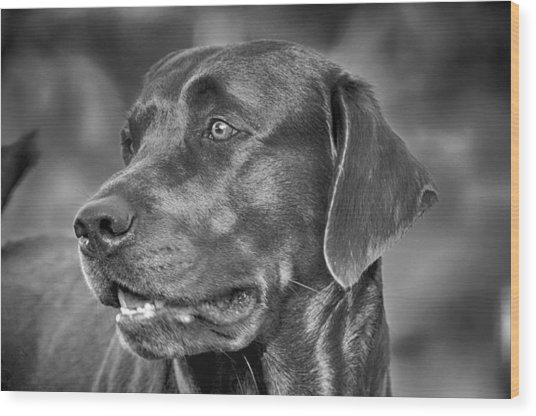 Labrador Sweetie Wood Print