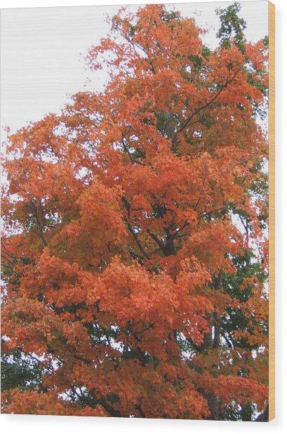 Lady Autumn - Tree Wood Print by Margaret McDermott
