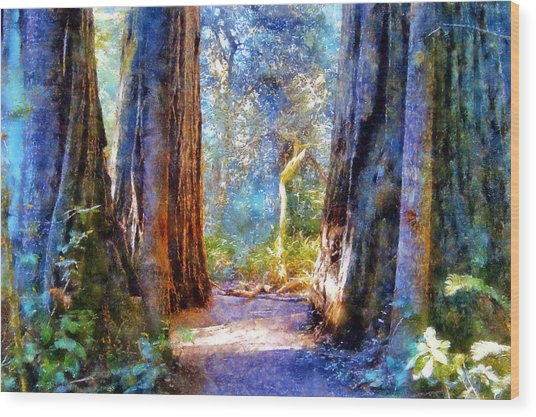 Lady Bird Johnson Grove Wood Print