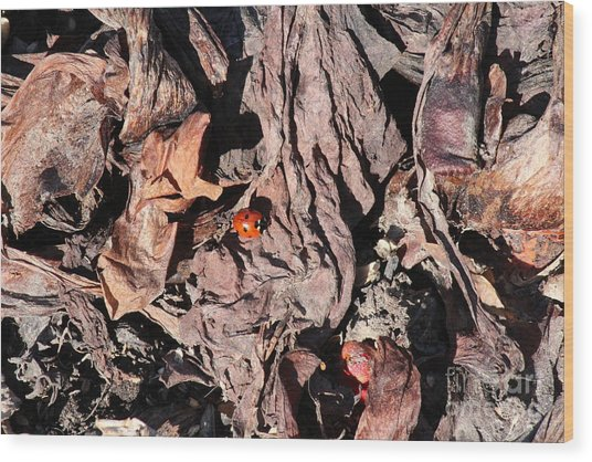 Lady Bug In Spring Wood Print