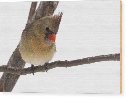 Lady Cardinal Wood Print by Jill Bell
