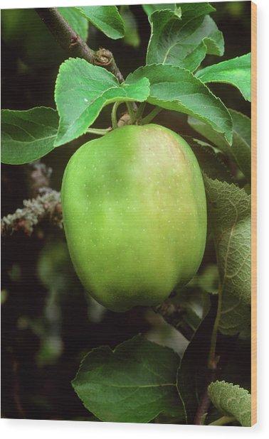 Lady Henniker Apple On Branch Wood Print