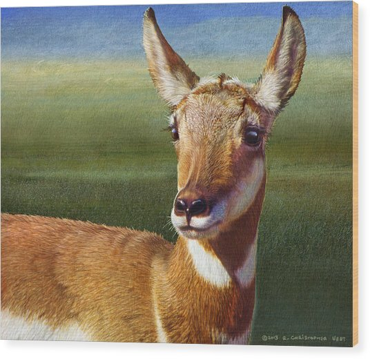 Lady Pronghorn Wood Print by R christopher Vest