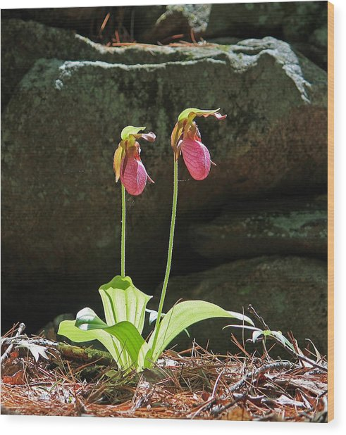 Lady Slippers At Moore State Park 5 Wood Print