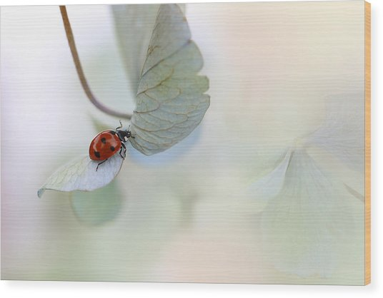 Ladybird On Blue-green Hydrangea Wood Print