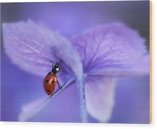 Ladybird On Purple Hydrangea Wood Print by Ellen Van Deelen