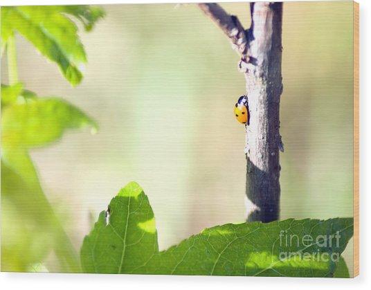 Ladybug 1.2777 Wood Print by Stephen Parker