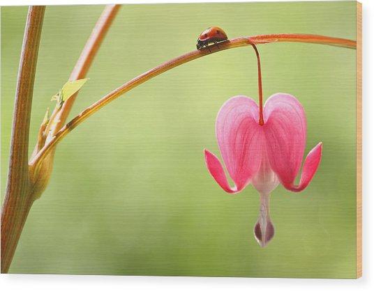 Ladybug And Bleeding Heart Flower Wood Print