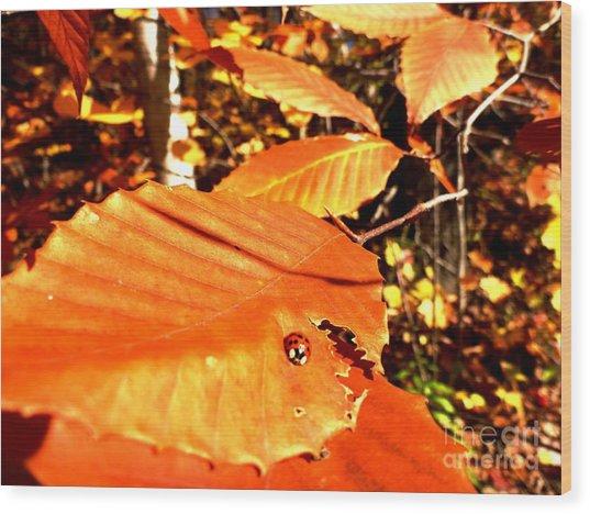 Ladybug At Fall Wood Print
