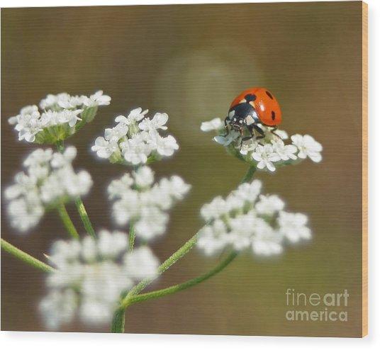Ladybug In White Wood Print