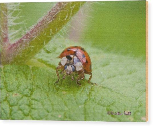 Ladybug On Boneset Leaf Wood Print
