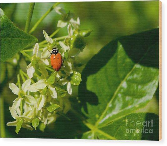 Ladybug On Flowers Wood Print
