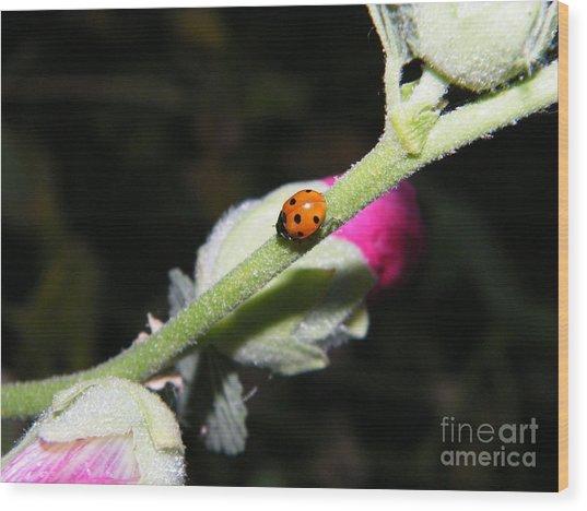 Ladybug Taking An Evening Stroll Wood Print