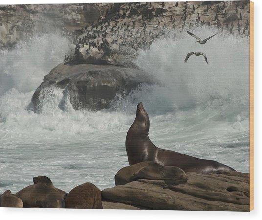 Lajolla Surf N Nature Preserve Wood Print