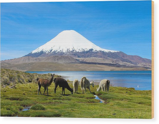Lake Chungara Chilean Andes Wood Print