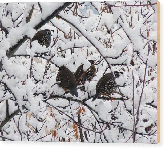 Lake Country Quail Wood Print