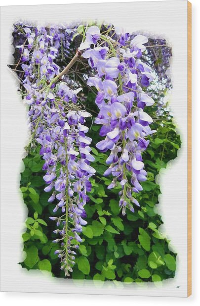 Lake Country Wisteria Wood Print